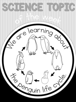 Science topic of the week poster - Penguin life cycle