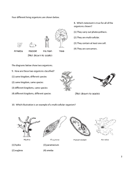 Classification worksheet middle school pdf