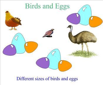 ScienceBirds & eggs