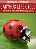The Ladybug Life Cycle and The Grouchy Ladybug By Eric Carle