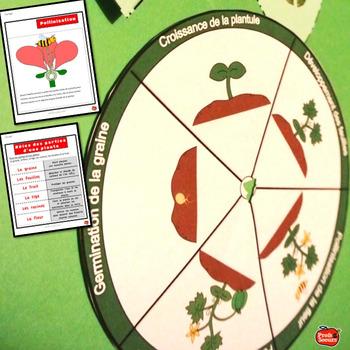 Sciences: Le Cycle de vie des plantes // Cahier Interactif