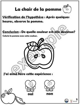 Sciences: la chair de la pomme