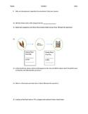 Sciencesaurus: Energy in Ecosystems