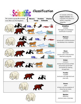 Scientific Classifications: Animals Handout