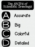 Scientific Drawings ABCD Poster