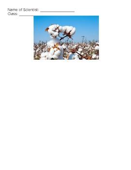 Scientific Method: Cotton Plants
