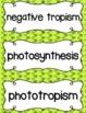 Scientific Method and Seeds- seed parts, germination, trop