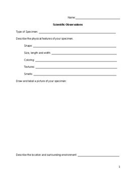 Outdoor Scientific Observation Worksheet
