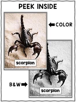 Close Reading Passage - Scorpion Activities