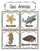 Sea Animal Activity