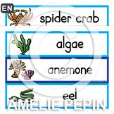 Sea Animals Illustrated Word Wall (36)