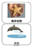 Sea Animals in Chinese Flashcards