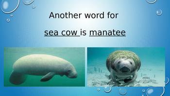 Sea Cows