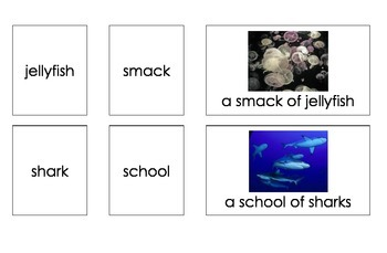 Sea Creature Groups (3-Part Montessori Cards)