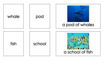 Sea Creature Groups (3-Part Montessori Cards)