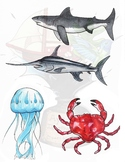 Sea Creatures Clipart