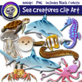 Sea Creatures Food Web / Ecosystem Clip Art
