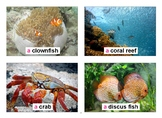 Sea Creatures Flashcards with Vocabulary