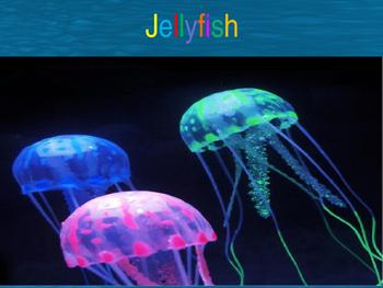 Sea Creatures~Jellyfish
