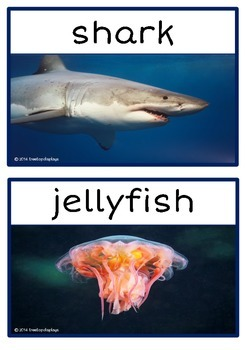Sea Creatures Photo Set