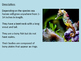 Sea Horse - Power Point facts information pictures