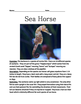 Sea Horse - review article facts information questions vocab word search PDF