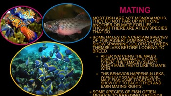 Fish - Powerpoint
