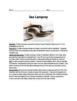 Sea Lamprey - review article questions vocabulary information facts