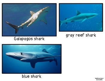 Sea Life Nonfiction Center Vocabulary Cards
