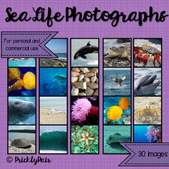 Sea Life Photo Backgrounds