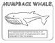 Sea/Marine Animal Coloring sheet- 12 Designs