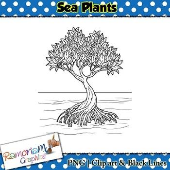 Sea Plants Clip art
