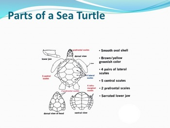 Sea Reptiles - Marine Life Vol. 5 - Slideshow Powerpoint Presentation
