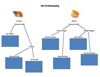 Sea Shell Mapping Chart