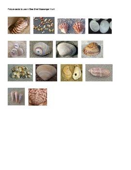Sea Shell Scavenger Picutres