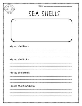 Sea Shell Senses