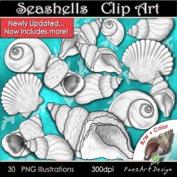 Sea Shells Clipart {Paez Art Design}