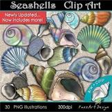 Seashells Clipart {Paez Art Design}
