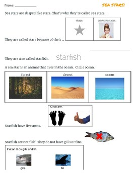Sea Stars/Starfish