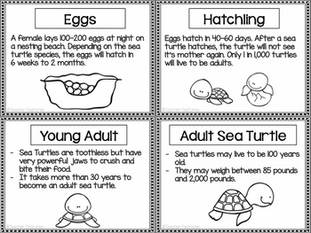 Sea Turtle Life Cycle by Teacher Features | Teachers Pay ...
