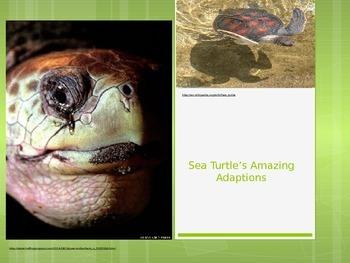 Sea Turtle Adaptation Powerpoint