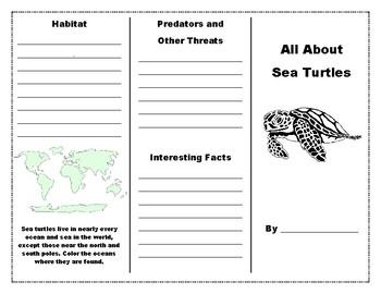 Sea Turtle Brochure