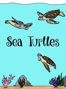 Sea Turtle Conservation