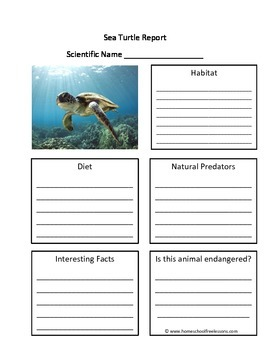Sea Turtle Fill in the Blank One Page Animal Report