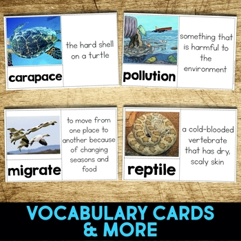 Sea Turtle: Informational Article, QR Code Research & Fact Sort