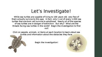 Sea Turtle Investigation