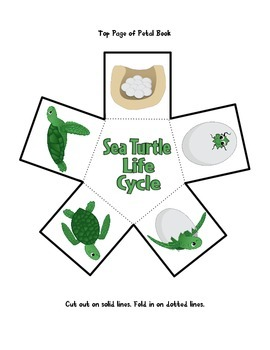 Sea Turtle Life Cycle by The K-2 Guru | Teachers Pay Teachers