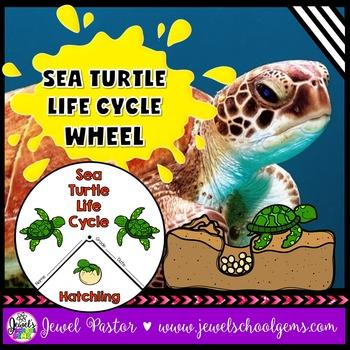 Animal Life Cycle Activities (Sea Turtle Life Cycle Craft)