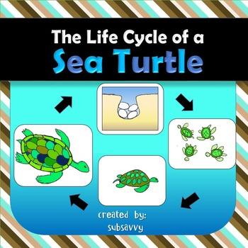 Sea Turtle Life Cycle by StudentSavvy | Teachers Pay Teachers
