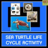 Sea Turtle Life Cycle Activity